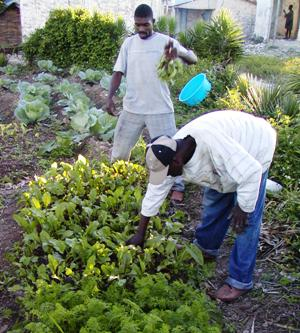Farmers working community vegetable garden in Ivwa, Haiti.