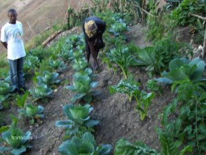 Haitian woman farming hillside