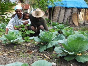 Haitian family working in organic garden.