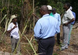 Cantave teaching farmers in Bayone