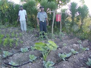 Two Haitian farmers using agro-ecological techniques