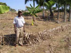 Farmer leader in Maissade, Haiti showing soil conservation work undertaken by internally displaced people.