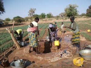 Women working together to water their fields.
