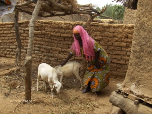 Goats and other livestock are key for rural livelihoods and for maintaining soil fertility.