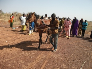 Farmers in eastern Burkina Faso learning to make zai holes using horses.